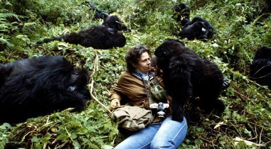 Секс женщин с шемпанзе