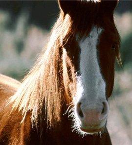 гороскоп на 2015 год для лошади