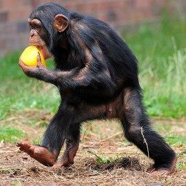 гороскоп на 2015 год для обезьяны