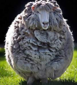 гороскоп на 2015 год для овцы и козы