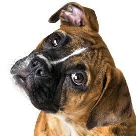 гороскоп на 2015 год для собаки