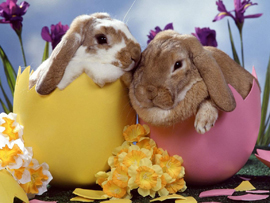 вся правда о пасхальном кролике