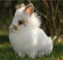 гороскоп на 2015 год для кролика