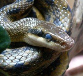 гороскоп на 2015 год для змеи