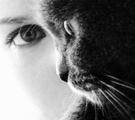 Бесплатный тест: Какова ваша любимица? Характер вашей кошки