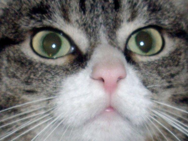 Котенок в доме. Как ухаживать за котенком. Маленькие котята – новые жильцы в доме