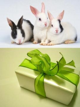 Как встречать Новый 2011 год белого кролика