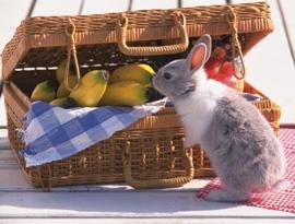Новогодний стол 2011, готовим стол к новому году кота и кролика