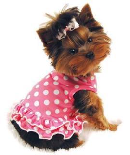 Модная одежда для маленьих собачек