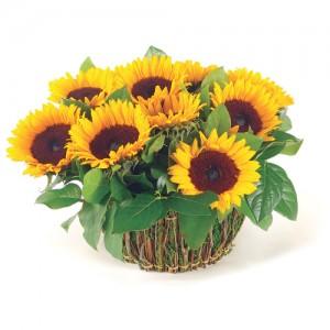 Цветы для мужчин какие цветы дарят