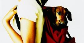 Ветеринарная клиника: куда отвести свою собаку
